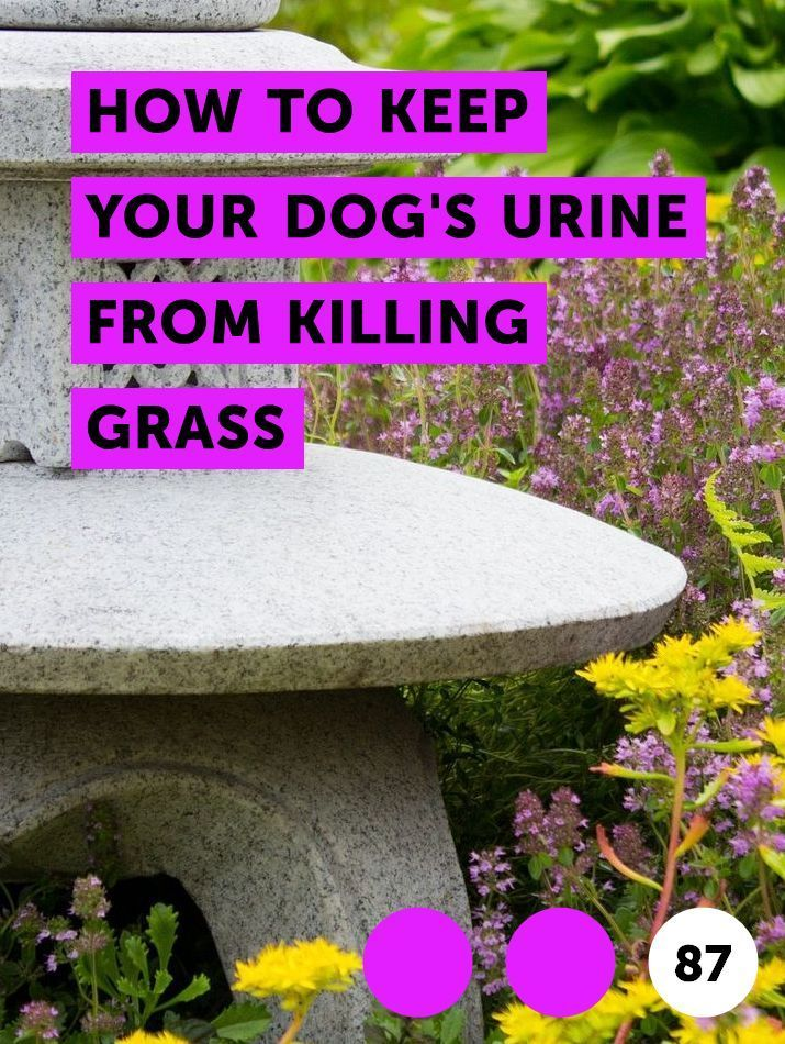How To Plant Grass Seed In Bare Spots Planting Grass Lawn