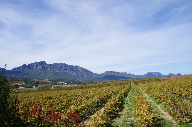 Vineyards with an amazing backdrop.
