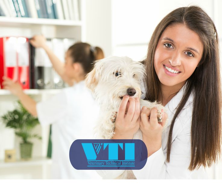 The  Best Veterinary Receptionist Ideas On