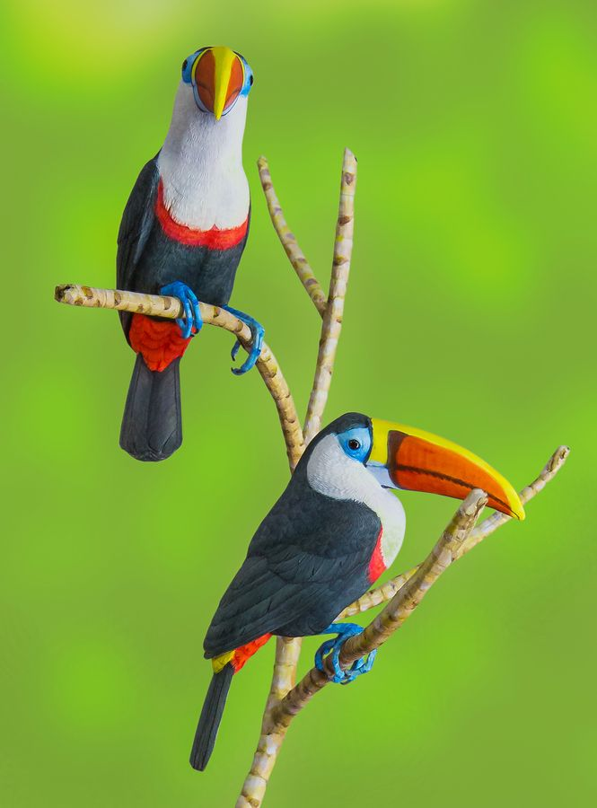 """""""Colorful Toucan"""" by George Bloise"""