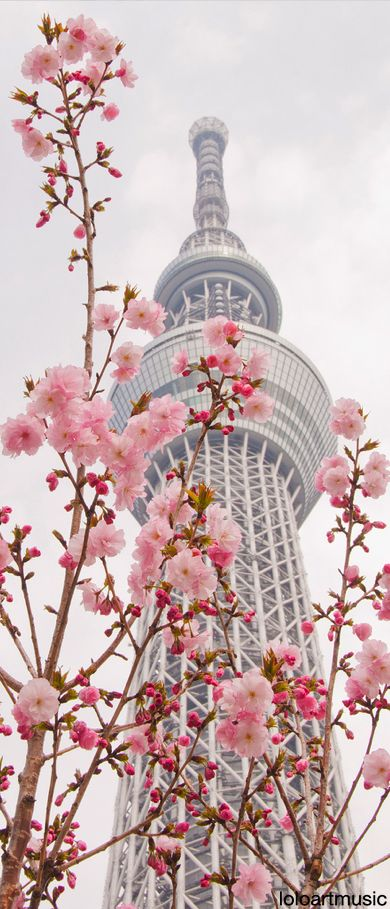 Tokyo Skytree of cherry blossoms, Japan http://abnb.me/e/1Bw4yfnlSC