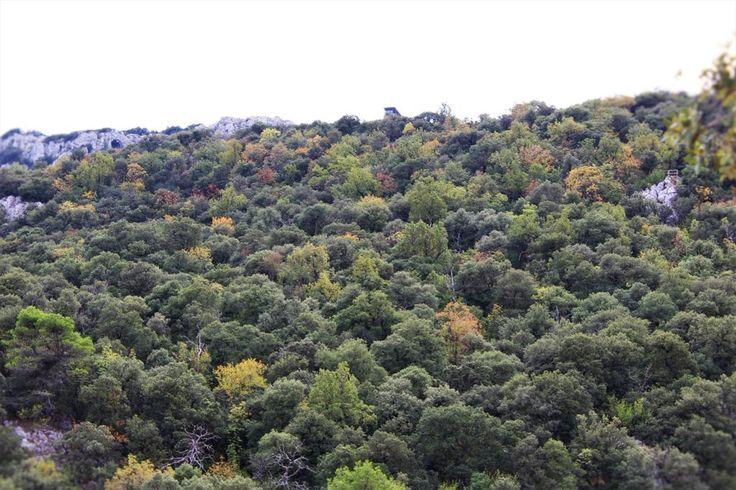 El otoño se hace notar en el Parque Natural de la Font Roja (Menejador arriba) - #Alcoi #Alcoy