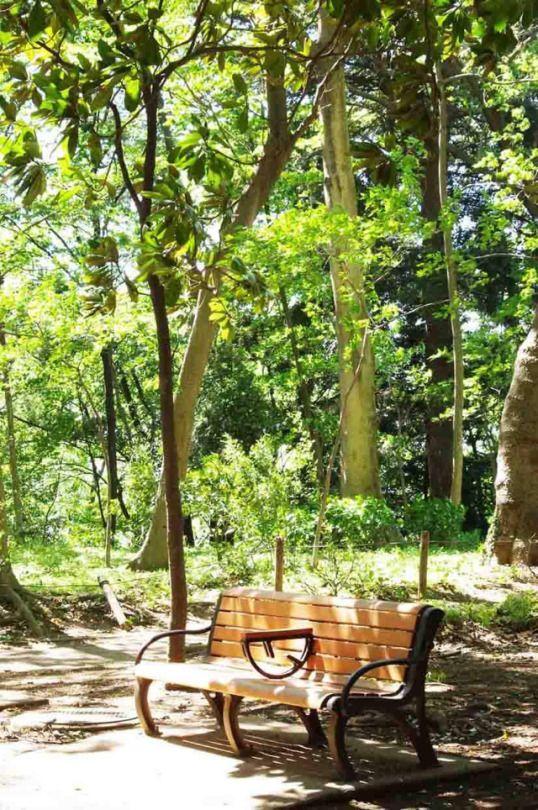 68:「タイサンボクの木漏れ日ふりそそぐベンチ」@林試の森公園