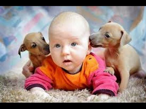 Дети и животные 2 ● Приколы с животными осень 2014 ● Dogs, Cats & Cute Babies Compilation