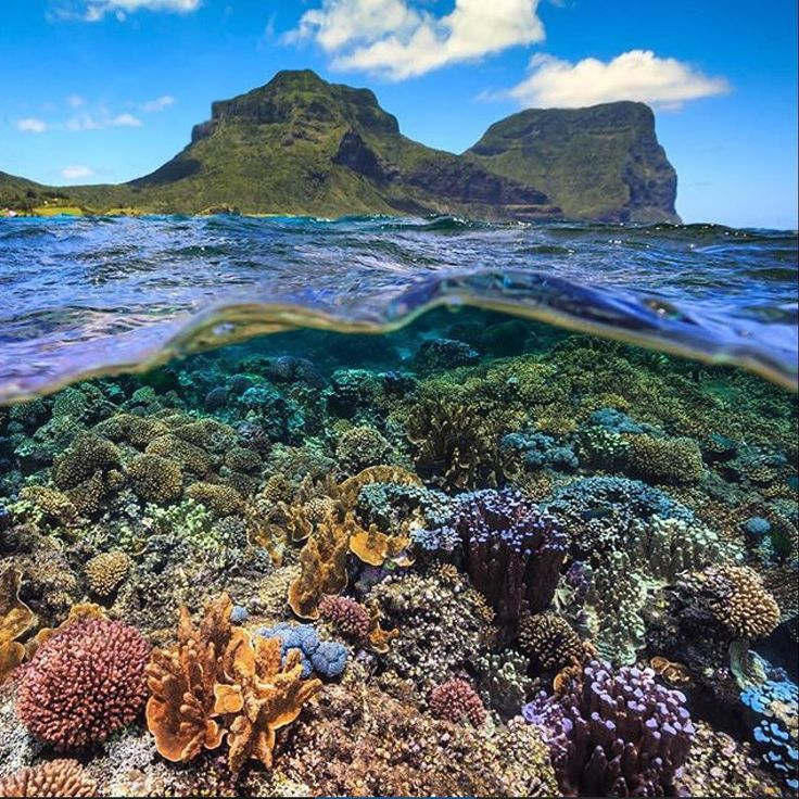Lord Howe Island Beaches: 62 Best Things To Do On Lord Howe Island Images On