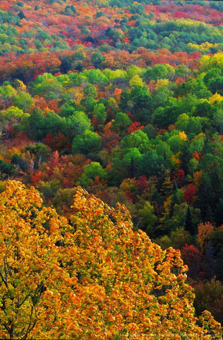 Autumn Trees, Ottawa Valley, Ontario