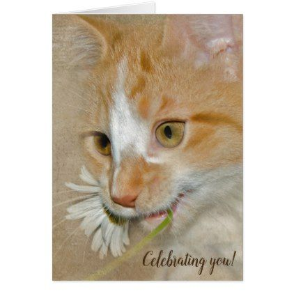 birthday kitten with daisy card - birthday cards invitations party diy personalize customize celebration