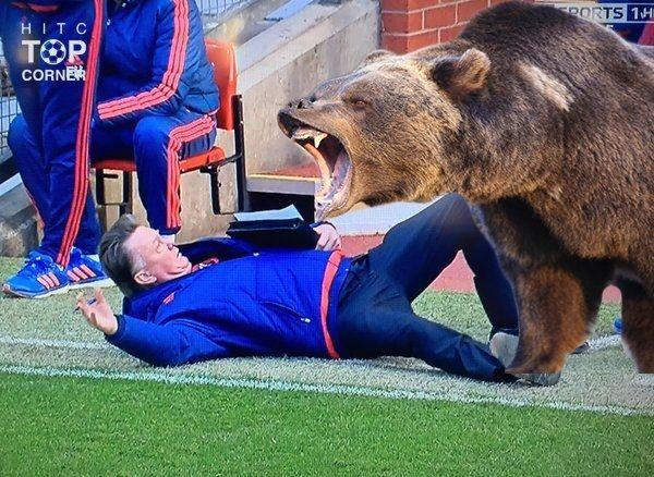 Śmieszne memy po meczu Manchester United vs Arsenal Londyn • Louis van Gaal położył się przed niedźwiedziem • Wejdź i zobacz mem >> #football #soccer #sports #pilkanozna