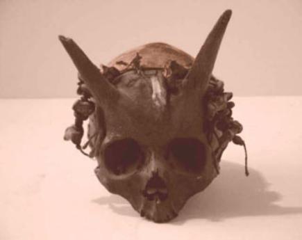 Horned Human Skulls, Burlington UFO Center, an Umbrella Arm of BUFO Paranormal and UFO Radio, Horned Human Race, Ancient Races