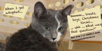 Kitten named Not Jose. 11 weeks. Born in a workshop.  oasisanimalrescue.ca