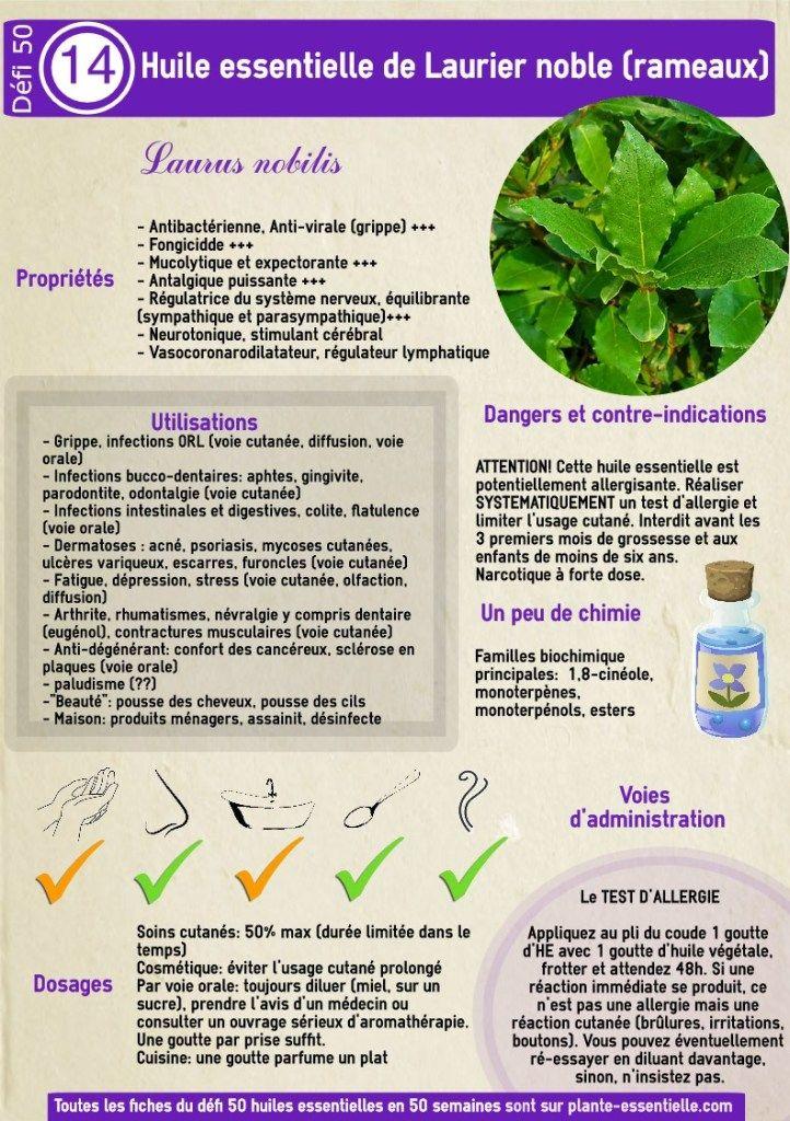 L'huile essentielle de laurier noble: propriétés (Laurus