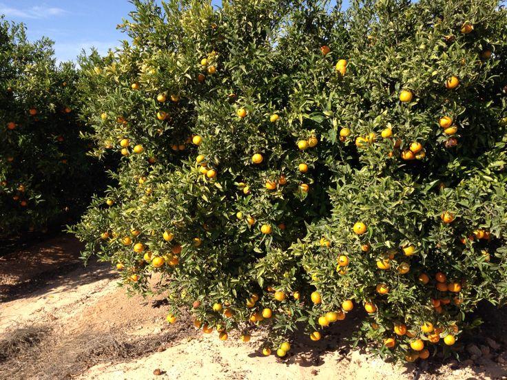 53 best images about mandarinas on pinterest youtube