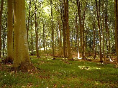 Original forest on  Mols
