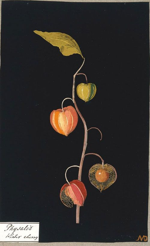 Paper Collage | Early Collage art | Mary Delany |Winter cherry