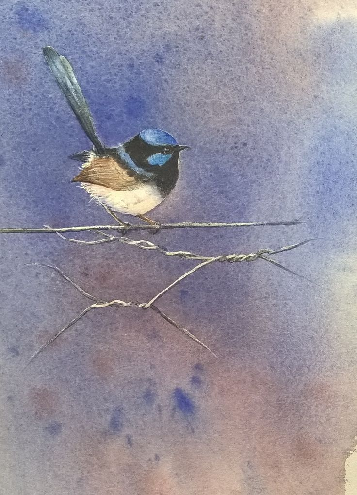 'LITTLE BLUE WREN' Watercolour 45x30 2016