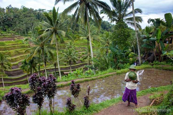 Bali is Indonesia's most famous island, and probably one of the most popular holiday destinations in the world. Here are tips on how to save money in Bali.