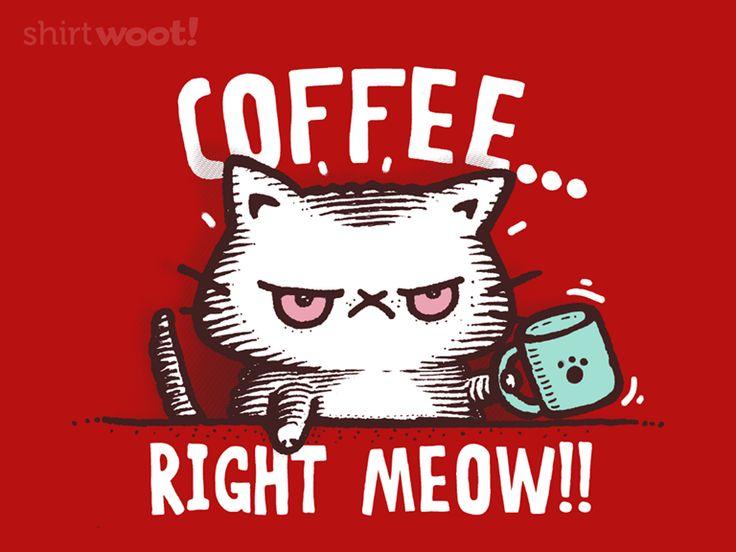 El gatito enojado!