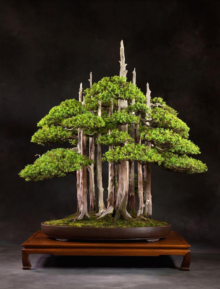 Iconic Bonsai tree Goshin by John Naka