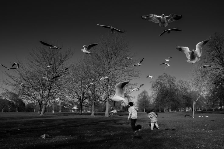 #hydepark, children play with doves