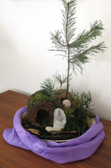 A November nature table.  Is that a living tree?  So sweet, and transitions into December for decorating.