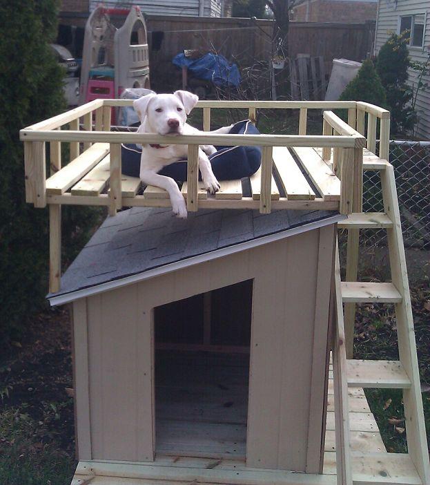The 25 Best Build A Dog House Ideas On Pinterest Dog Friendly
