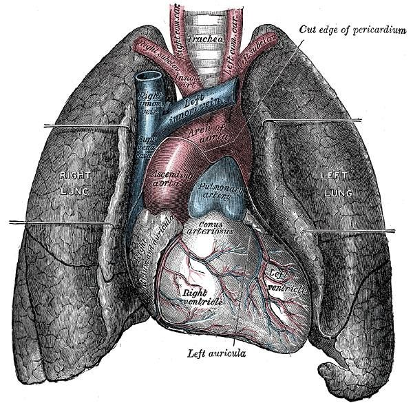 About Breathing Exercises That Improve Lung Capacity
