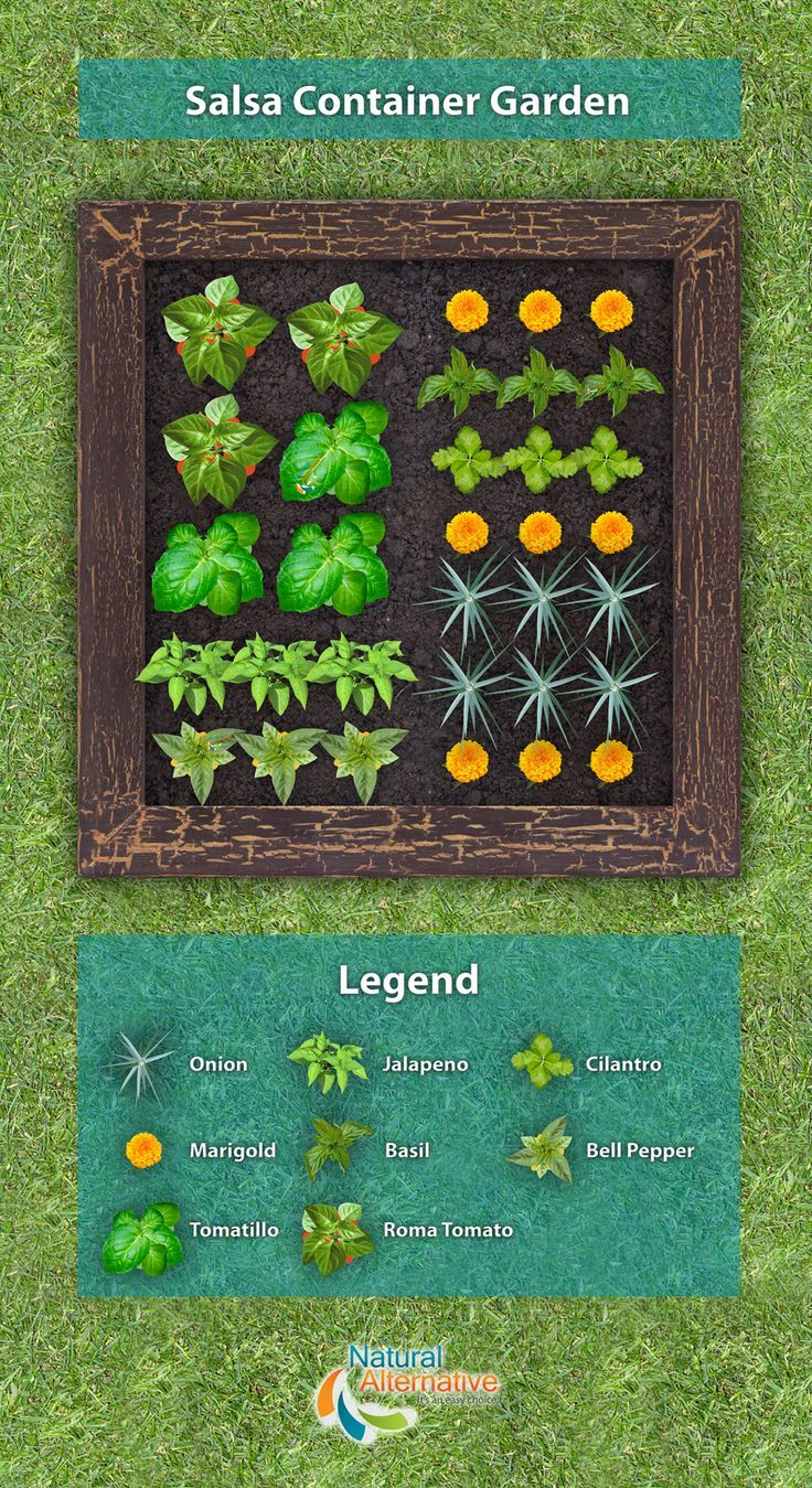 Want a unique garden to plant with a purpose? Plan this Salsa Container Garden!