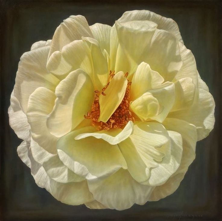 Delicate-hyper-realistic-paintings-of-roses-by-Gioacchino-Passini-03.jpg (740×738)