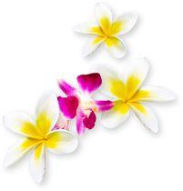 ハワイについて学び、ハワイスペシャリスト検定を受けられるハワイ州観光局認定の公式サイト「アロハプログラム」。オンライン講座や動画、ウェブセミナーでハワイの基本情報、歴史、文化、自然、イベントについて深く学びましょう。