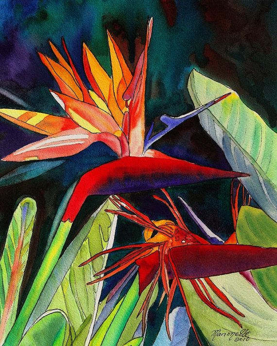 Bird of Paradise 8x10 print from Kauai Hawaii  by kauaiartist, $22.00    Please visit her shop. She is amazing!!!!