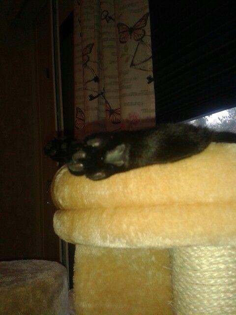 Vallu's paw :)