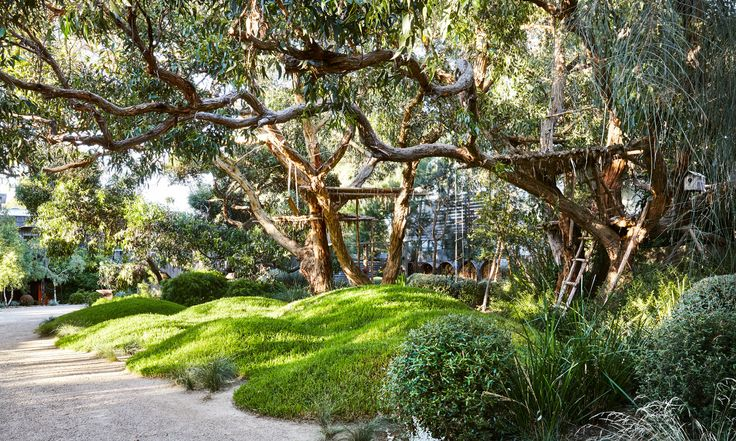 The garden is dominated by a couple of magnificent stringybark trees (Eucalyptus obliqua) – Image by Caitlin Mills