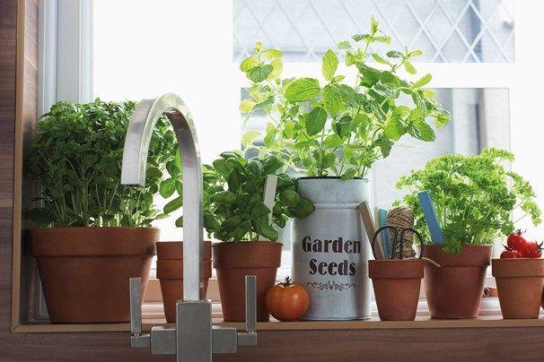 How To Start Your Own Windowsill Herb Garden Growing Herbs Windowsill Garden Herbs Indoors