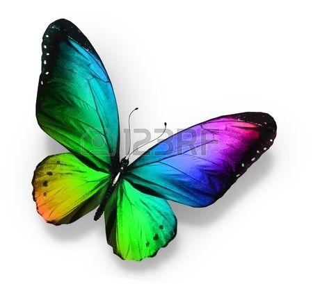 Color de la mariposa aislado en blanco Foto de archivo