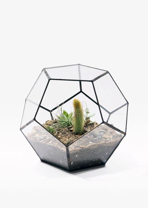 Geodesic Glass TerrariumDodecahedron Terrariums, Cactus Terrarium, Glasses, Plants, Score Sold, Gardens, Tables Dodecahedron, Design, Soldering Terrariums