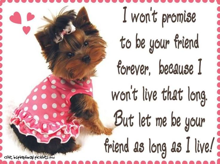278 images) Best Friend Birthday Wishes – Birthday Messages - Page ...