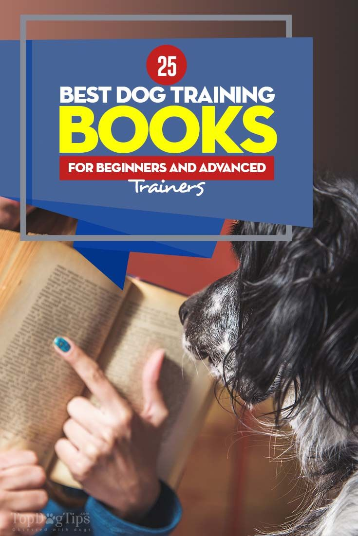25 Best Dog Training Books For New And Existing Owners Dog