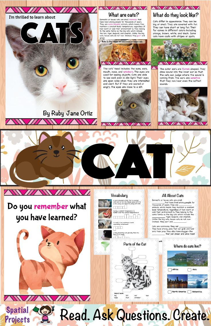 Pin On Cat Unit Study