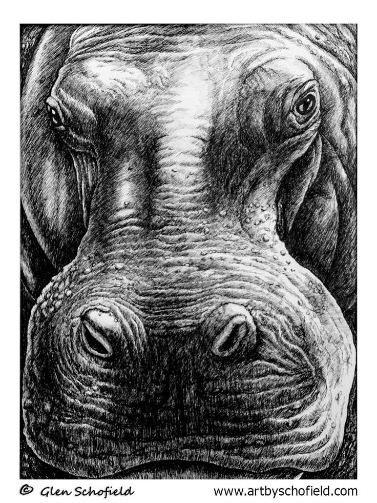 #020 Hippo - 18 X 24 <---- www.artbyschofield.com #animal #art #artoftheday #creative #drawing #fineart #glenschofield #hippo #icon #iconic #icons #illustra #illustration #ink #myart #onlineart #onlineartgallery #onlineartsales #paint #painting #paintings #penandink #pens #picture #portraits #portraiture