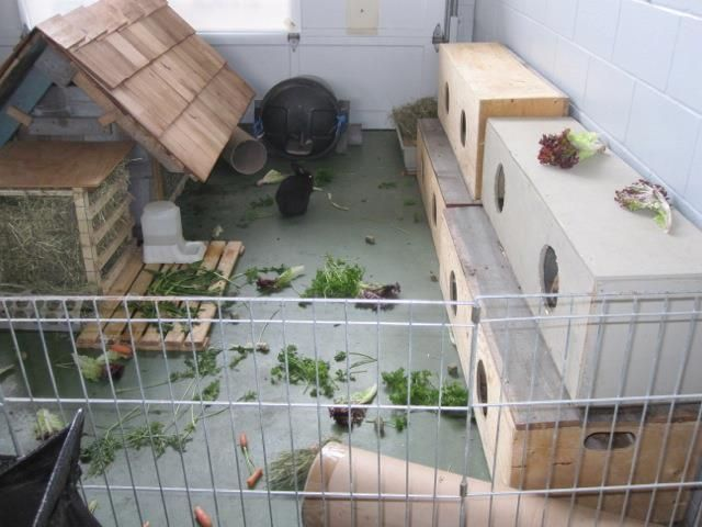 Lovely Indoor Rabbit Set Up Lots Of Places To Hide