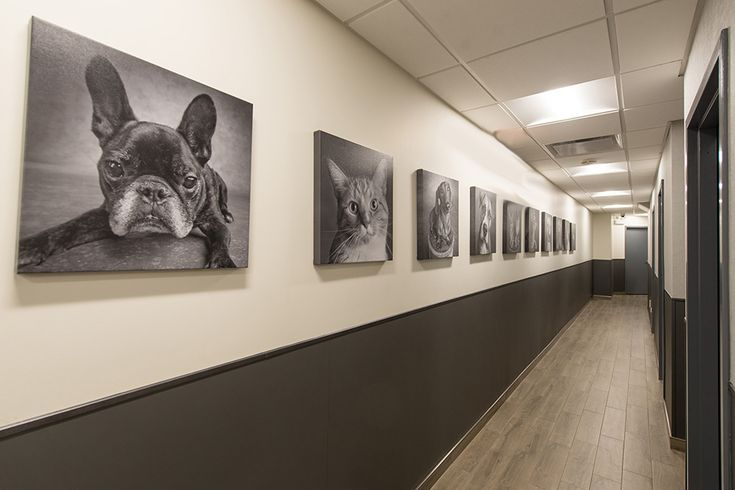 Apex Design designed 1450 SF, Interior design renovation for an established animal hospital that has been around since the 1950's. Warm wood tones & light linen textures form a soothing space, while maintaining the durability of materials used