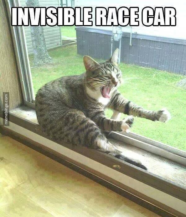 Kitty has a need for speed