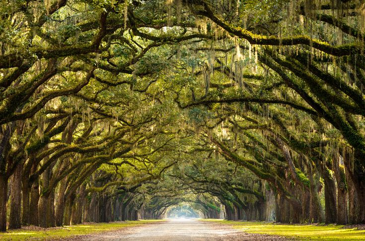 Looking for a long weekend road trip itinerary? How about DC to Charlotte to Savannah?