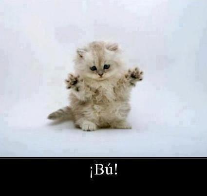 imagenes de gatitos tiernos - Buscar con Google