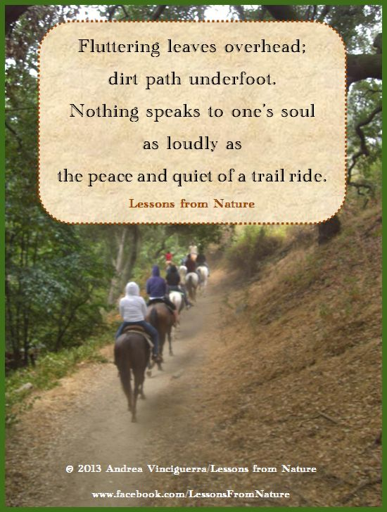 quotes, horses, trail riding, nature      © 2013 Andrea Vinciguerra/Lessons from Nature