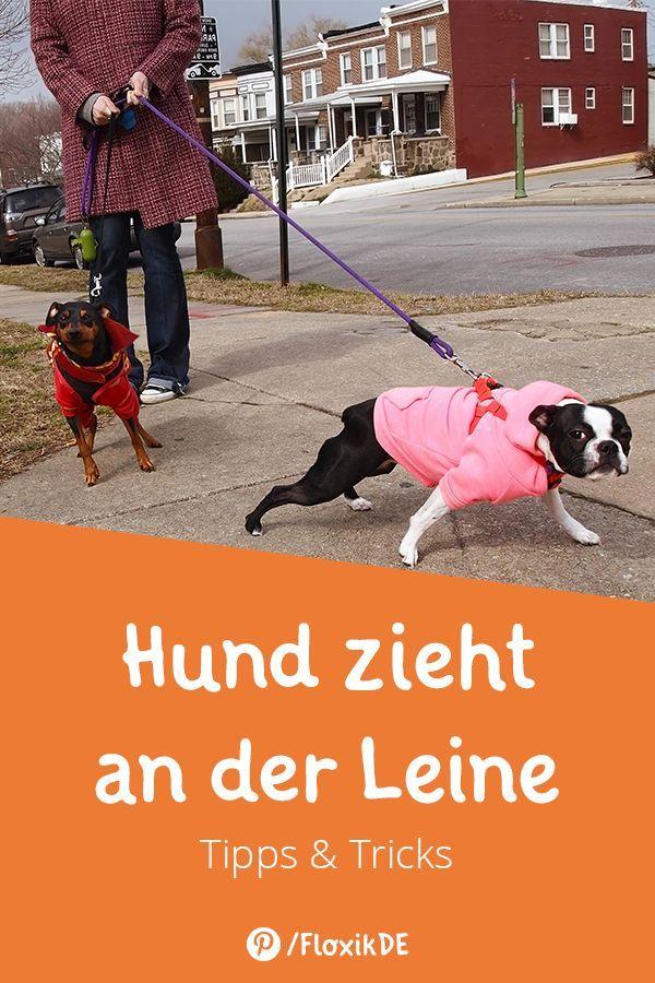Hund Zieht An Der Leine Tipps Tricks Hunde Hundeprodukte