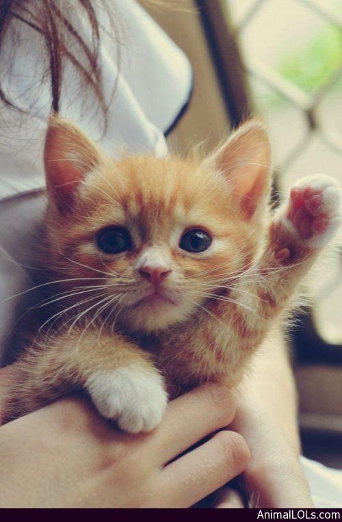 Oh. Hi!. - http://www.animallols.com/cats/oh-hi/
