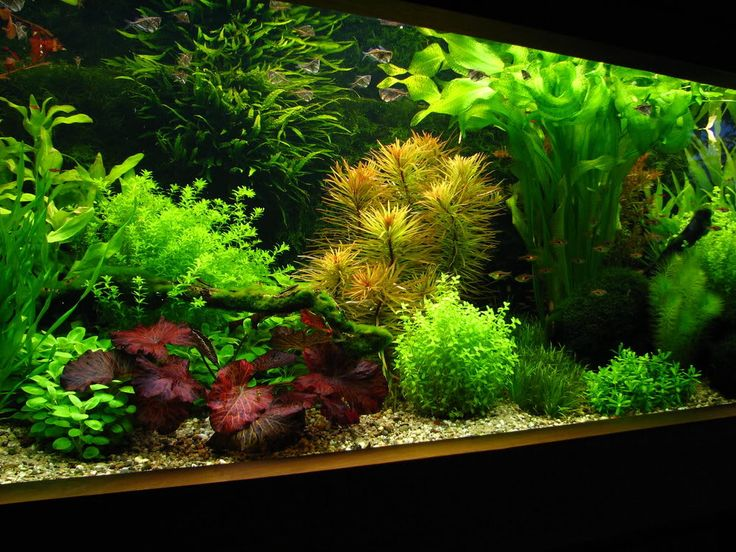 Beautiful aquarium. ( Even without the fish! LOL!)