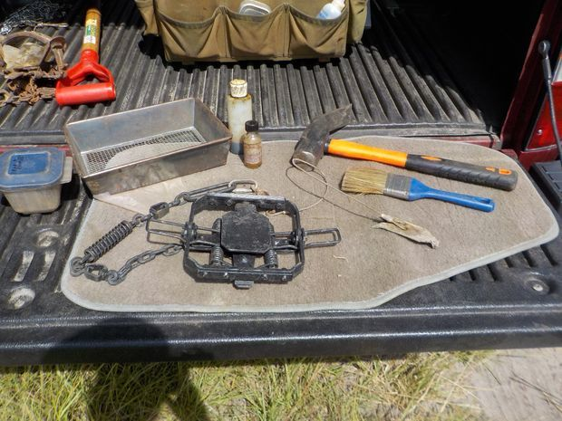 how to set traps for coyotes