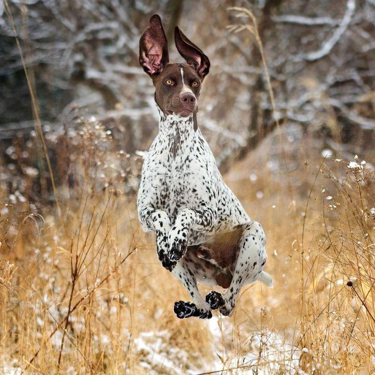 Park Art|My WordPress Blog_Golden Retriever Puppies Utah Classifieds